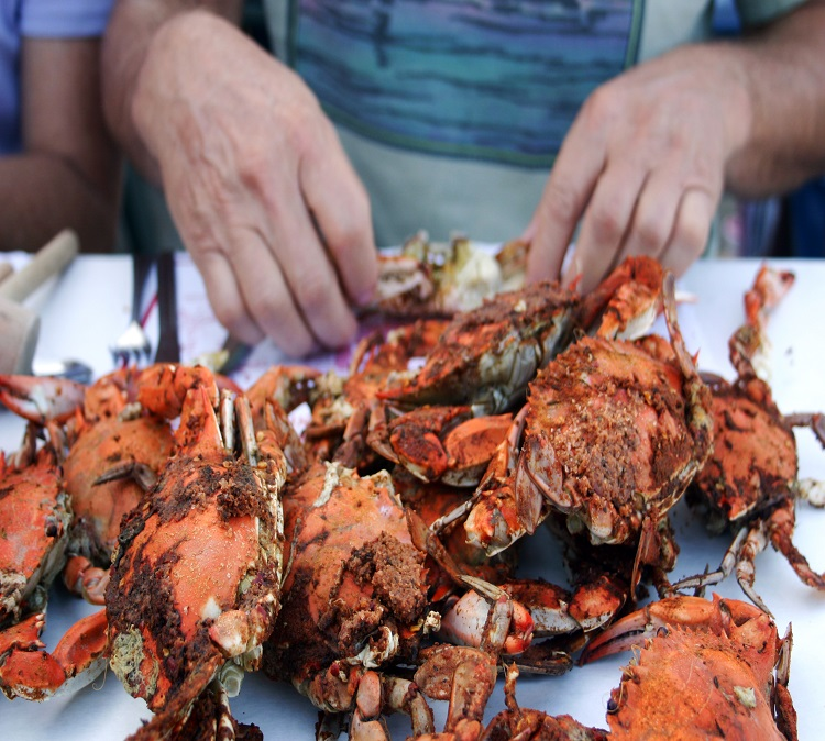 maryland blue crabs steamed male medium maryland blue crabs by
